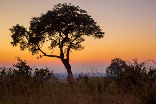 Camps et itinéraires dans le parc Kruger