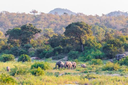 Budget et organisation d'un safari dans le parc Kruger