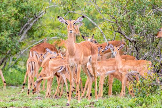 Activités et conseils dans le parc Kruger