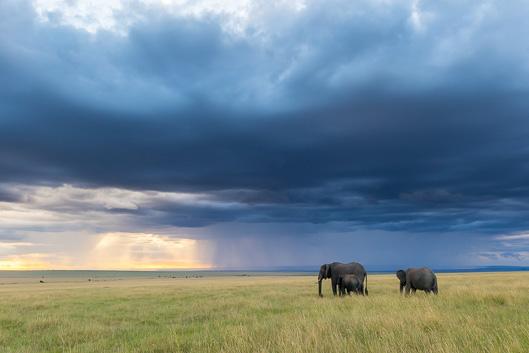 Itinéraire et budget d'un safari au Kenya