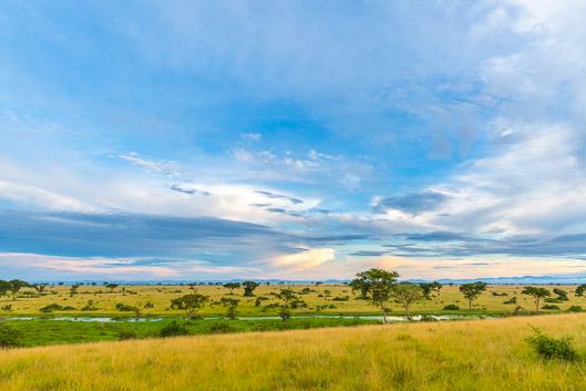 Itinéraire et budget d'un safari en Ouganda