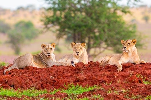 Les meilleurs safaris en Afrique