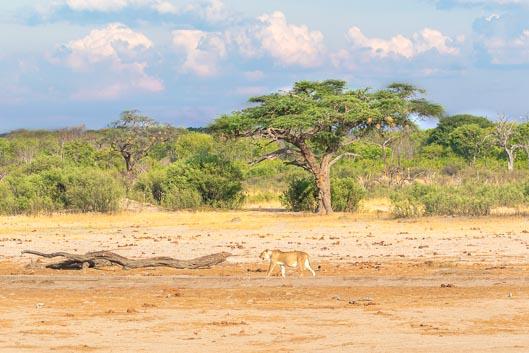 Itinéraire Zimbabwe #2 : de Hwange aux chutes Victoria