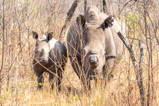 Itinéraire Zimbabwe #1 : de Beitbridge à Matopo