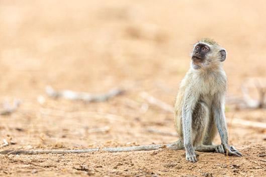 Organisation et budget d'un safari au Zimbabwe